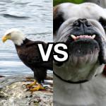 Manly Warringah Sea Eagles vs Canterbury Bankstown Bulldogs