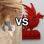 Broncos vs Dragons