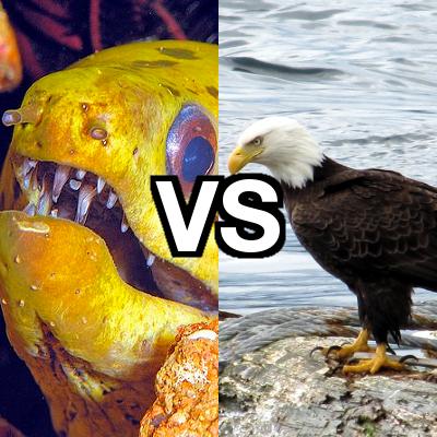 Parramatta Eels vs Manly Warringah Sea Eagles